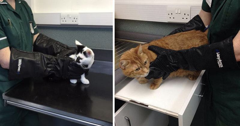 Our Gloves protect vets & veterinary nurses from cat bites and scratches