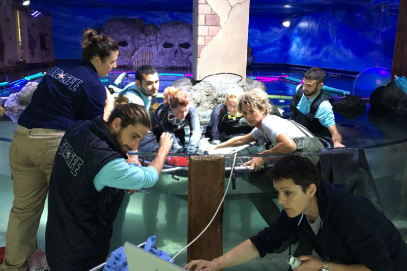 Ray Tray & Venom Defender Gloves used to ultrasound a pregnant Blacktip Reef Shark