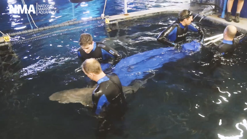New sharks arrive at the National Marine Aquarium