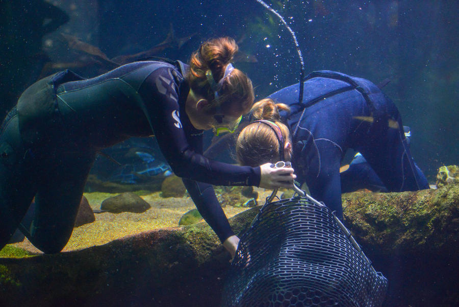 Stingray Examinations at the Houston Zoo