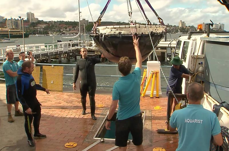 Transporting Stumpy the 200kg Stringray