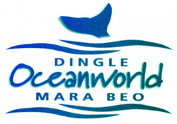 Louise Overy - Animal Curator @ Dingle Oceanworld
