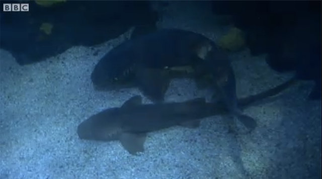Shark Transported to Birmingham Sealife To Breed